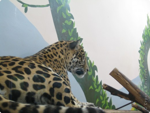 Мои дети съездили в Екатеринбург и побывали в зоопарке. Привезли фотографии, чтобы порадовать меня. Не все удачные, но кое-что я выбрала. Это белый медведь. фото 5