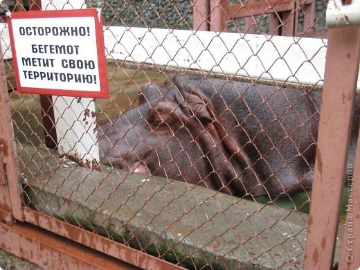 Мои дети съездили в Екатеринбург и побывали в зоопарке. Привезли фотографии, чтобы порадовать меня. Не все удачные, но кое-что я выбрала. Это белый медведь. фото 4