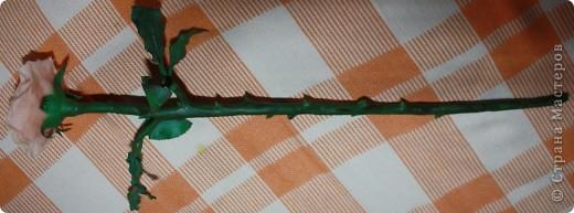Розы фото 12