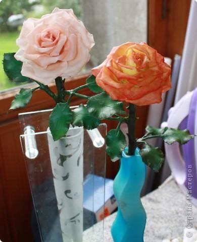 Розы фото 10