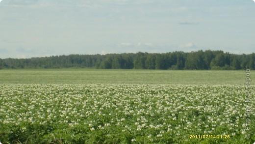 Поехали мы в гости, а там такая красота: березки, цветы, поля, вкусная клубника и земляника, вообщем много всего......... фото 7