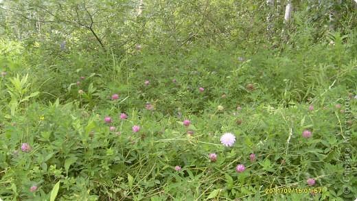 Поехали мы в гости, а там такая красота: березки, цветы, поля, вкусная клубника и земляника, вообщем много всего......... фото 13