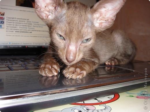 Мой первый опыт в плетении из газет - кошкин дом))) фото 6
