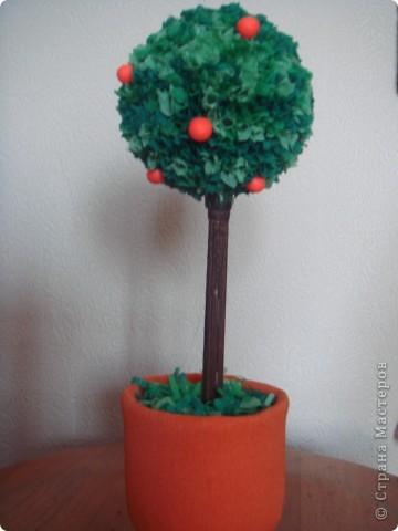 Моё первое апельсиновое деревце:)  (Сделано благодаря МК.)