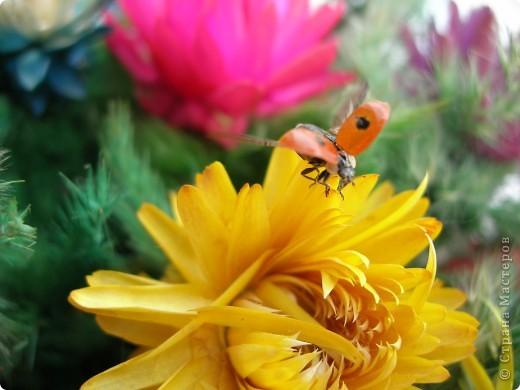 из жизни насекомых -божьи коровки и светлячки фото 3