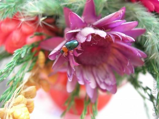 из жизни насекомых -божьи коровки и светлячки фото 10