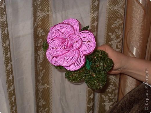 Розовая роза. фото 1