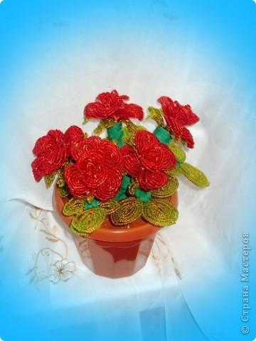 Розовая роза. фото 4