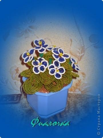 голубенькая фиалочка фото 4