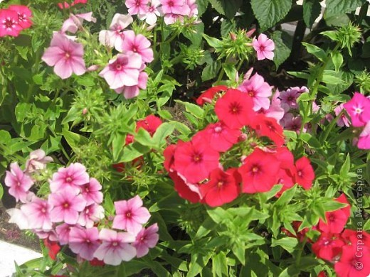 Здравствуйте жители страны. Я очень люблю цветы. Но дома на четвертом этаже выращивать негде. И я в свое удовольствие цветоводством занимаюсь на работе. Я работаю на железной дороге, а это моя станция. фото 9