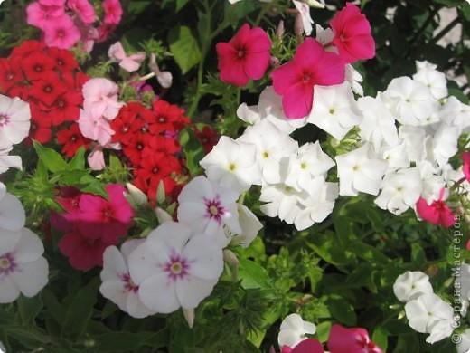 Здравствуйте жители страны. Я очень люблю цветы. Но дома на четвертом этаже выращивать негде. И я в свое удовольствие цветоводством занимаюсь на работе. Я работаю на железной дороге, а это моя станция. фото 12