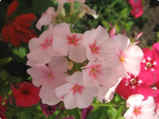 Здравствуйте жители страны. Я очень люблю цветы. Но дома на четвертом этаже выращивать негде. И я в свое удовольствие цветоводством занимаюсь на работе. Я работаю на железной дороге, а это моя станция. фото 13