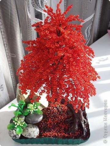 Красная сакура фото 2