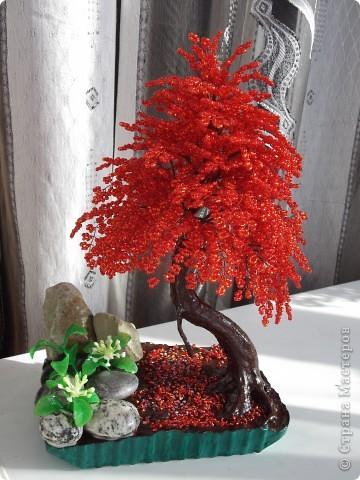 Красная сакура фото 1