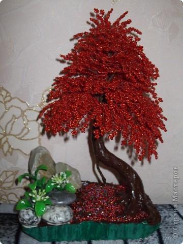 Красная сакура фото 3