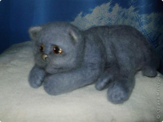 Котя фото 2