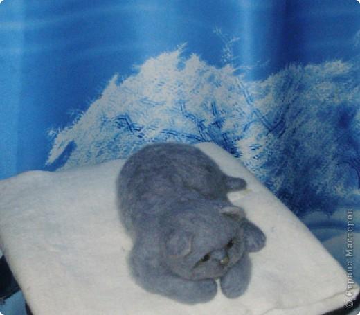 Котя фото 1