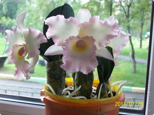 Орхидея фото 5