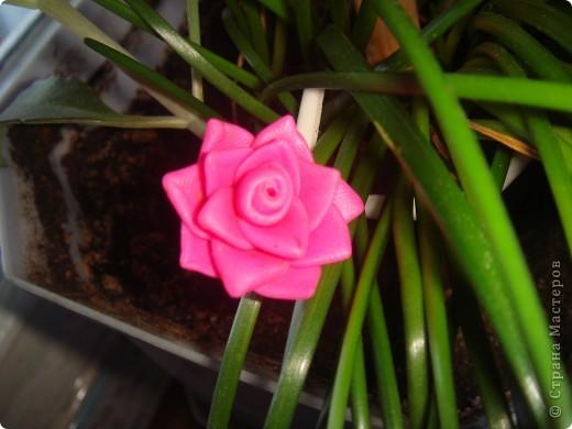 Розы из пластики  фото 1