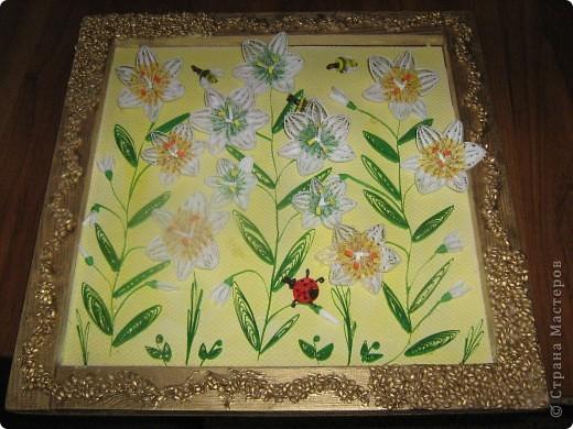 Лилии во всей красе фото 1