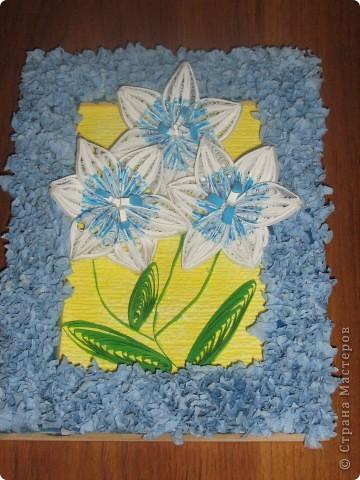 Лилии во всей красе фото 3