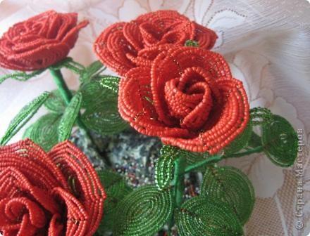 Розы.... фото 4