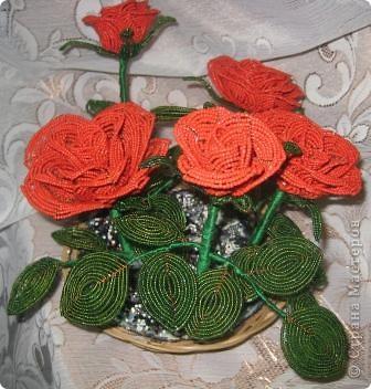 Розы.... фото 1