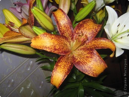 Цветы на моём участке фото 8