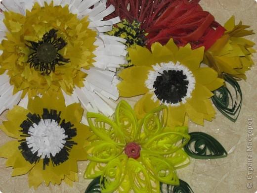 цветы фото 9