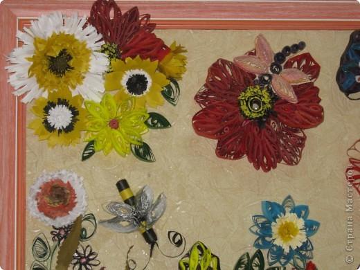 цветы фото 11