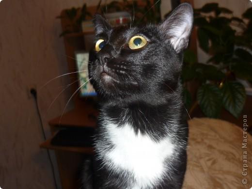 Мой любимый котофеюшка. Зовут его Тиша. Из всех зверюшек он у нас первенец. Ему пошел 4 год. Тишка обожает разговаривать и петь баллады. фото 1