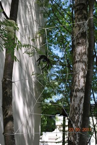 Вот теперь на территории нашего детского садика поселился паучок фото 2