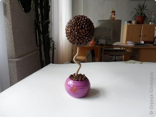 Мое очередное кофейное деревце. Ну не могу я делать ровный свол у деревца - все равно его короючит.. фото 1