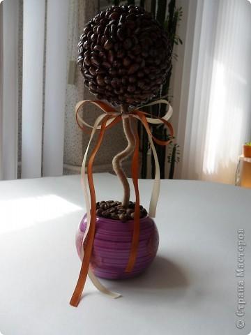 Мое очередное кофейное деревце. Ну не могу я делать ровный свол у деревца - все равно его короючит.. фото 2