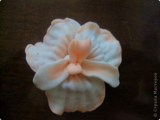 Такая вот орхидейка вышла фото 1