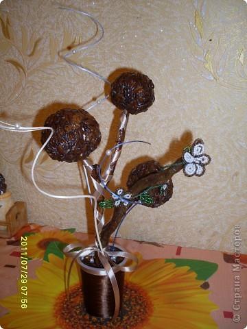кофейный первенец в подарок. фото 1