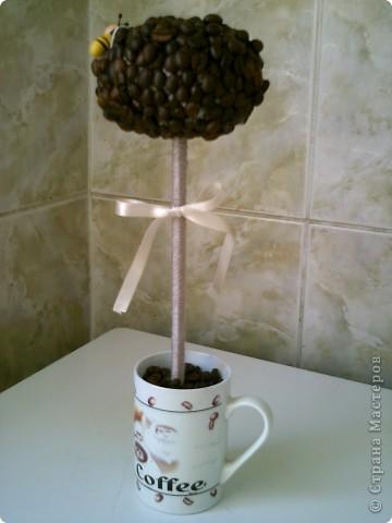 Първото ми кафеено дърво
