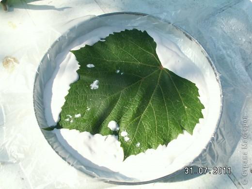 Мои первые виноградные листочки из гипса фото 6