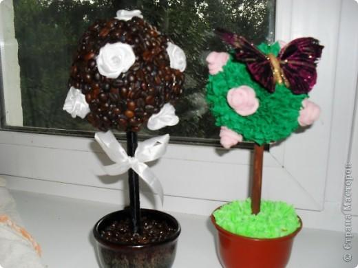 мои первые деревья фото 1