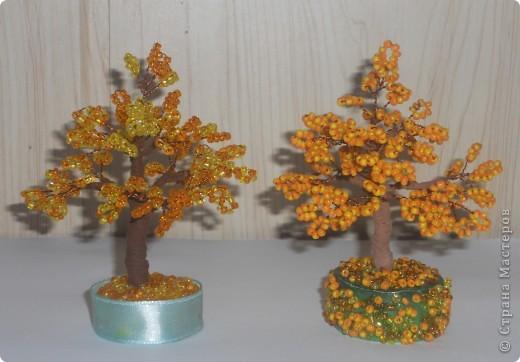 Осенние деревья фото 1