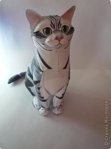 Кот из бумаги Бумага фото