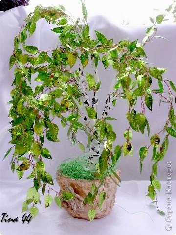 Пятое по счету кофейное дерево.Предыдущие радуют друзей. фото 4