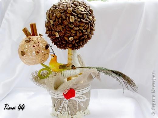 Пятое по счету кофейное дерево.Предыдущие радуют друзей. фото 1