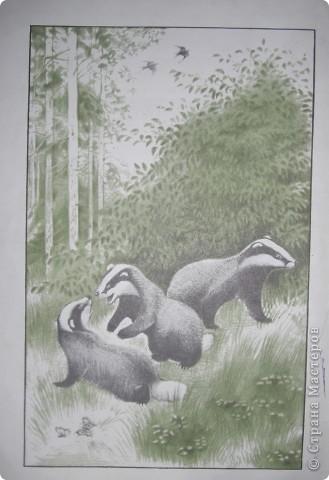 Природа фото 5
