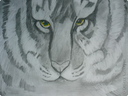 Ещё один тигр