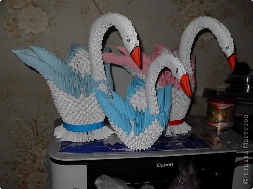 Лебединная семья фото 1