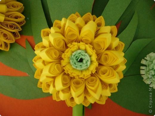 Август - время цветения Рудбекии. фото 2