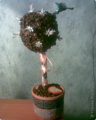 Ещё одно кофейное деревце с колибри. фото 1