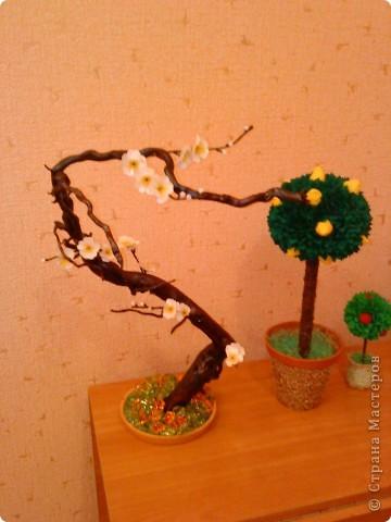 Сакура из коряги фото 2