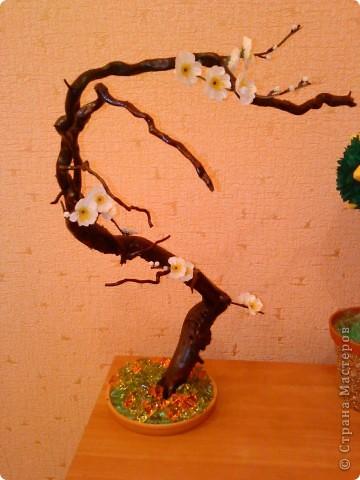 Сакура из коряги фото 1